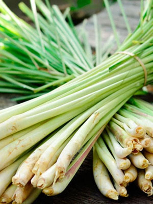 Lanka Exports - Lemongrass - Spices - Sri Lanka